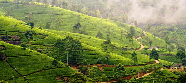odyssee-srilanka