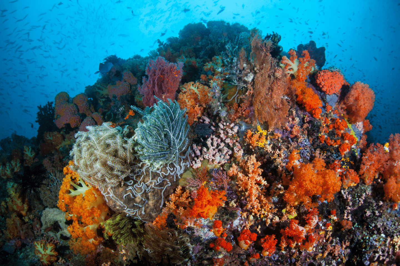 voyage-bali-plus-beaux-sites-plongée-indonesie-5