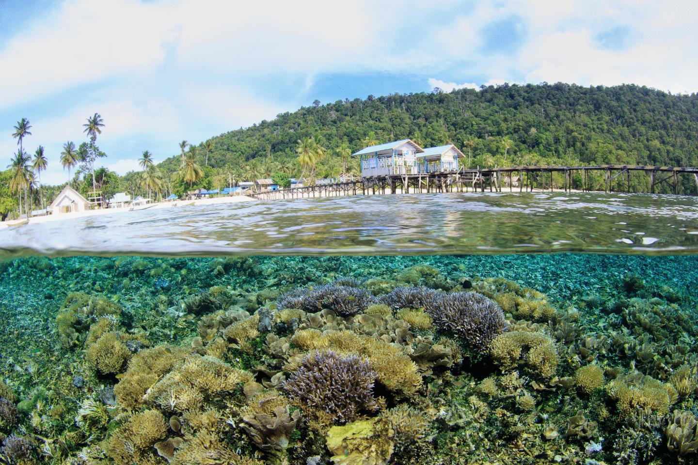voyage asie eco tourisme