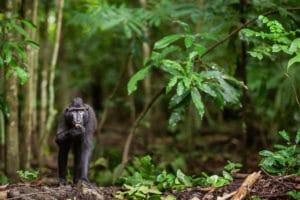 8 bonnes raisons voyager sulawesi
