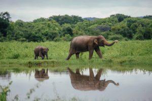 Tourisme et bien-être animal sont-ils compatibles ?